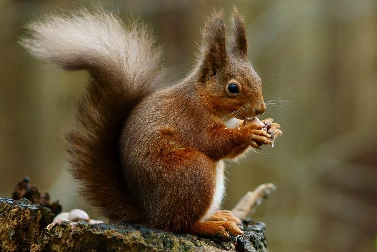 Hogyan védjük meg az ültetett izzókat a mókusoktól és a mókusoktól - Hogy A Legjobb Otthoni -